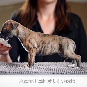 Azarin Flashlight (Lilly) 4 uker