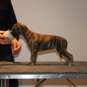 Brilliant Pearl's Crazy Legs (Thia) 6 weeks