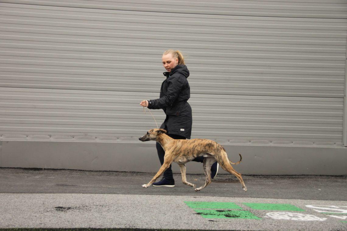 Brilliant Pearl's Crazy President (Donald) NAT DOG SHOW, Norsk Miniatyrhund klubb Varhaug 2018-03-25