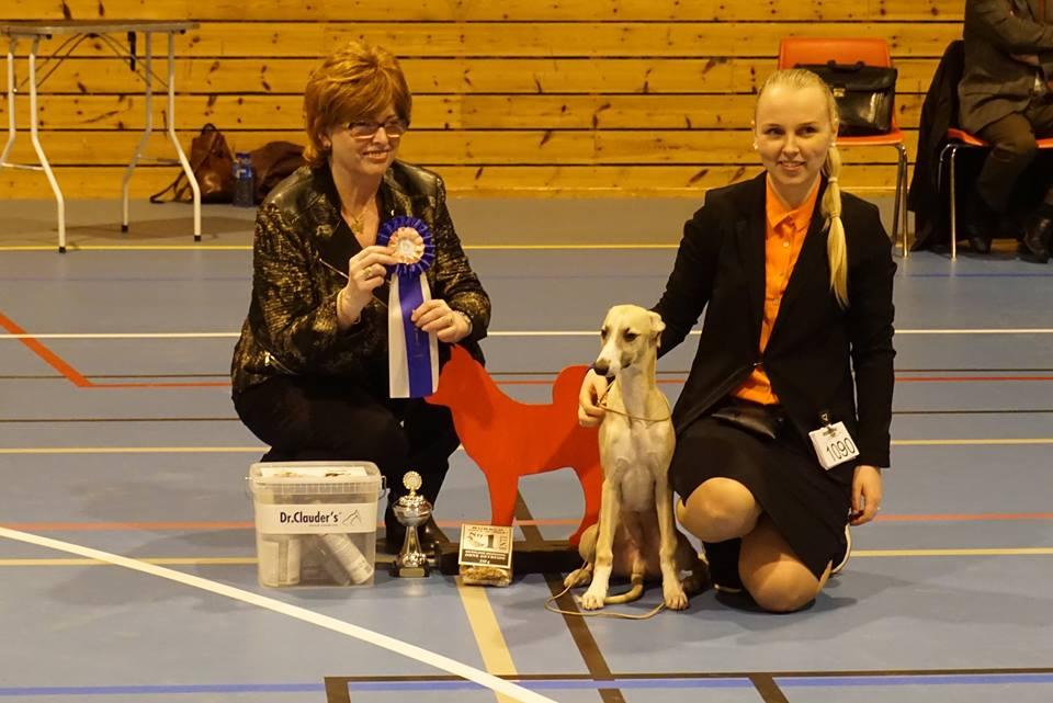 Brilliant Pearl's First Player (Balto) Norhordland Hundeklubb 2016-02-28