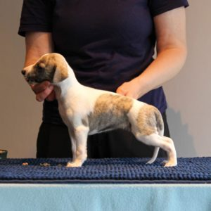 Brilliant Pearl's Funky Doctor (Misa) 5 weeks