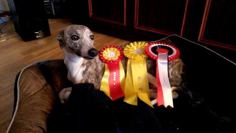 Courtborne Hufflepuff (Desmo) dog-show news 2014