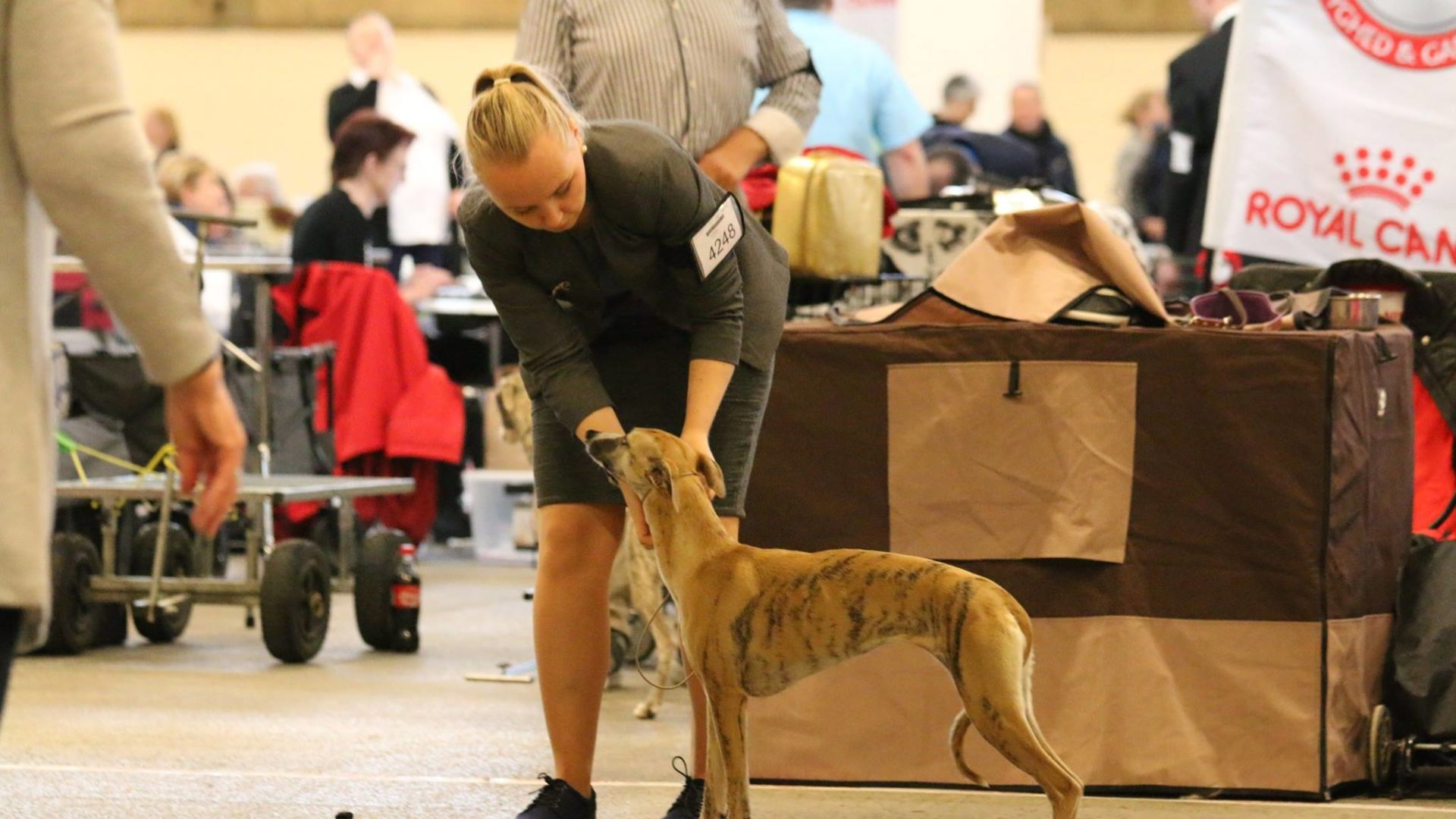 Courtborne Rose (Mia) DKK INT 2 DAY DOG SHOW, Danish Winner Show 2017
