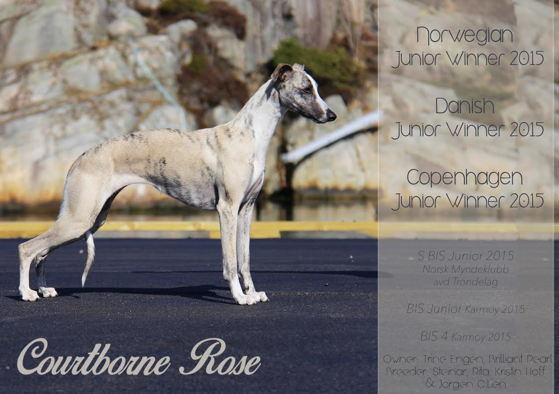 Courtborne Rose (Mia) promo