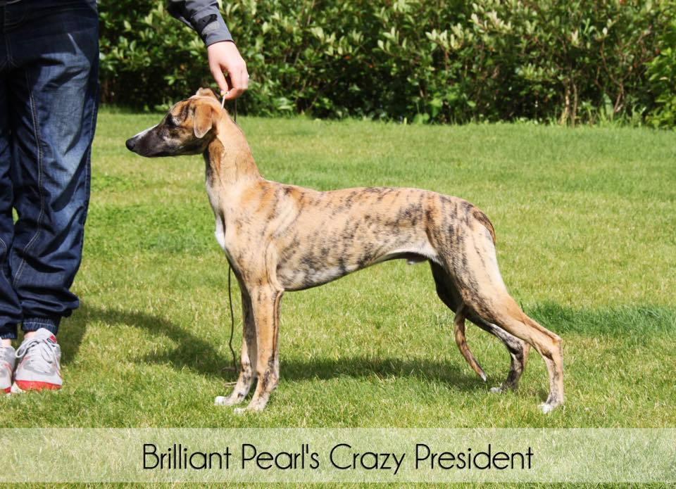 Brilliant Pearl's Crazy President (Donald) 4 months