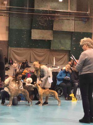 Brilliant Pearl's Crazy Pumpkin (Ibux) - NAT UTSTILLING Fitjar-Stord Hundeklubb 2019-11-10