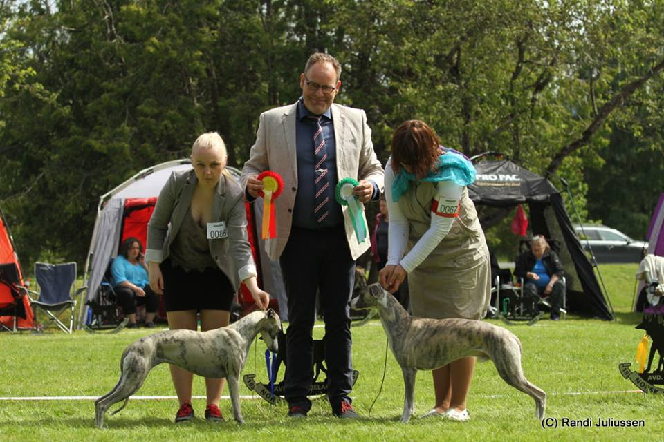 Courtborne Rose (Mia) INT dogshow NKK Trondheim & Norwegian Sighthoundclub Trøndelag Sighthound show